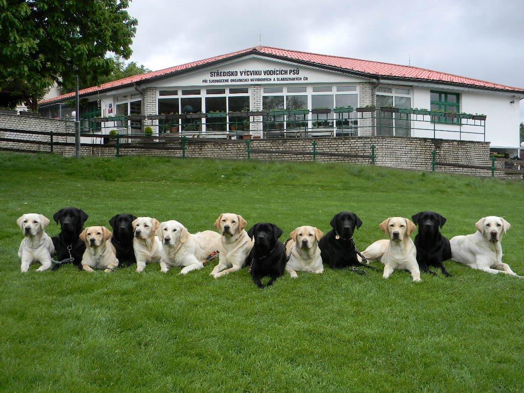 stredisko-vycviku-vodicich-psu-porada-den-otevrenych-dveri