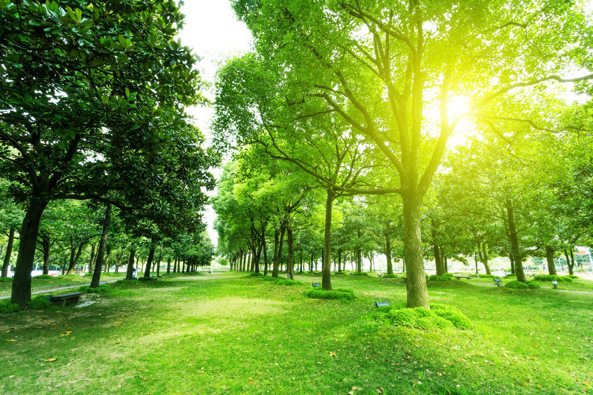 specialni-stromovy-tomograf-odhali-kondici-stromu